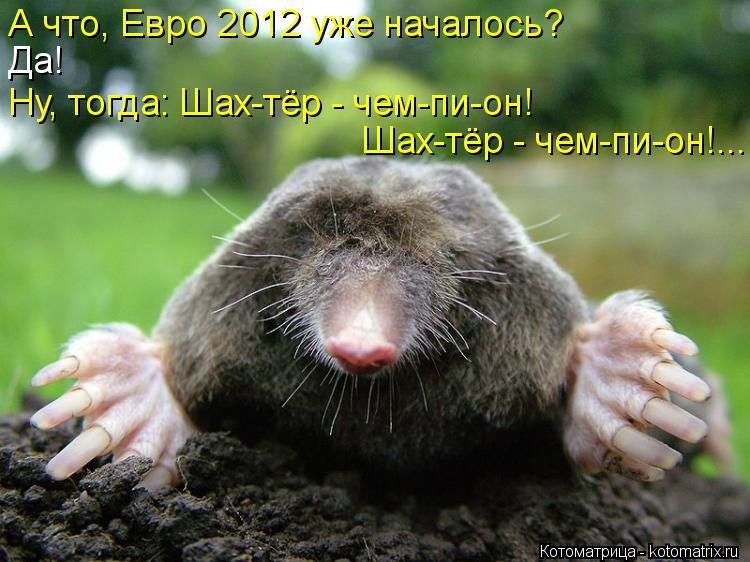Котоматрица: А что, Евро 2012 уже началось?  Да!  Ну, тогда: Шах-тёр - чем-пи-он!  Шах-тёр - чем-пи-он!...