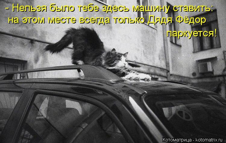 Котоматрица: - Нельзя было тебе здесь машину ставить: на этом месте всегда только Дядя Фёдор паркуется!