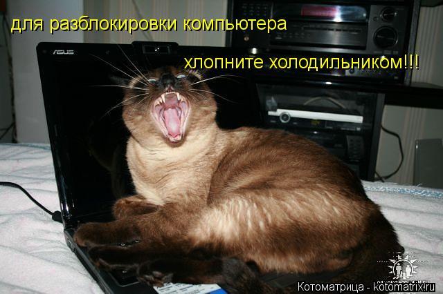 Котоматрица: для разблокировки компьютера хлопните холодильником!!!