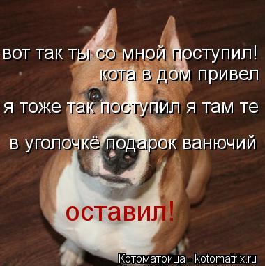 Котоматрица: вот так ты со мной поступил! кота в дом привел я тоже так поступил я там те  в уголочкё подарок ванючий оставил!