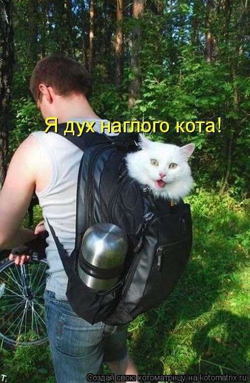 Котоматрица: Я дух наглого кота!