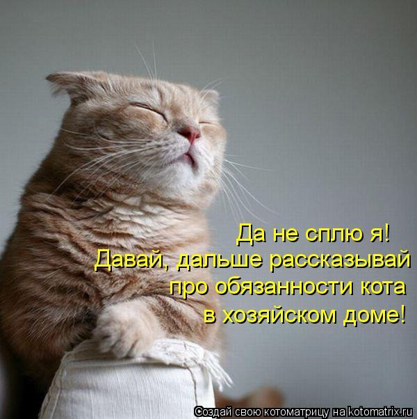 Котоматрица: Да не сплю я! Давай, дальше рассказывай про обязанности кота в хозяйском доме!