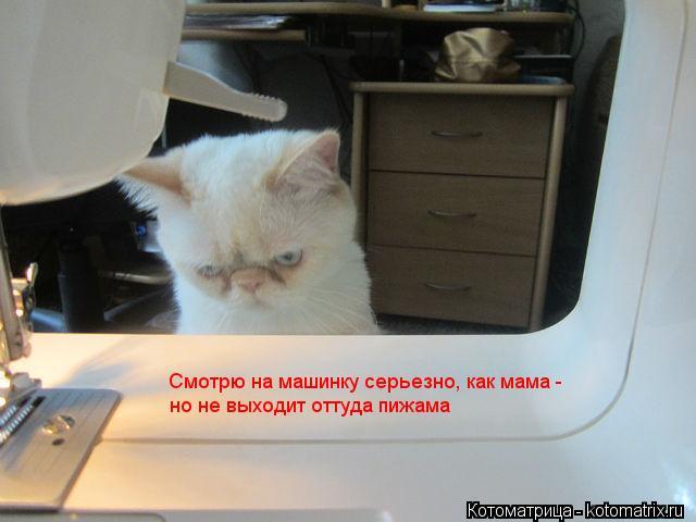 Котоматрица: Смотрю на машинку серьезно, как мама -  Смотрю на машинку серьезно, как мама -  но не выходит оттуда пижама