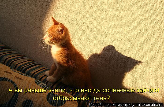 Котоматрица: А вы раньше знали, что иногда солнечные зайчики отбрасывают тень?