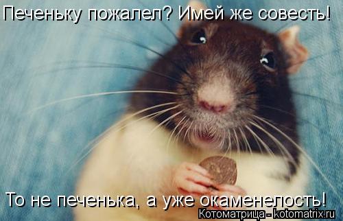 Котоматрица: Печеньку пожалел? Имей же совесть! То не печенька, а уже окаменелость!