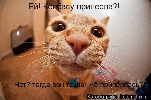 Котоматрица: Ей! Колбасу принесла?!  Нет? тогда вон тсуда! Чё припёрлась?!