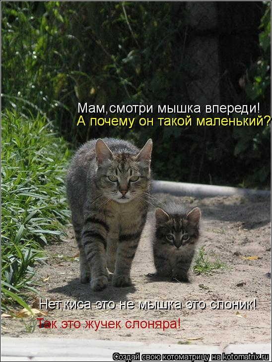 Котоматрица: Мам,смотри мышка впереди! Нет,киса это не мышка это слоник! А почему он такой маленький? А почему он такой маленький? Так это жучек слоняра!