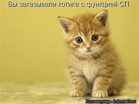 Котоматрица: Вы заказывали котика с функцией СП