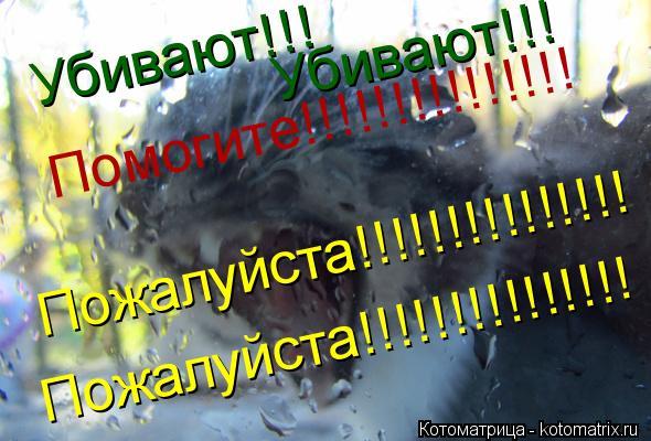 Котоматрица: Убивают!!! Убивают!!! Помогите!!!!!!!!!!!!!!! Пожалуйста!!!!!!!!!!!!!!! Пожалуйста!!!!!!!!!!!!!!!