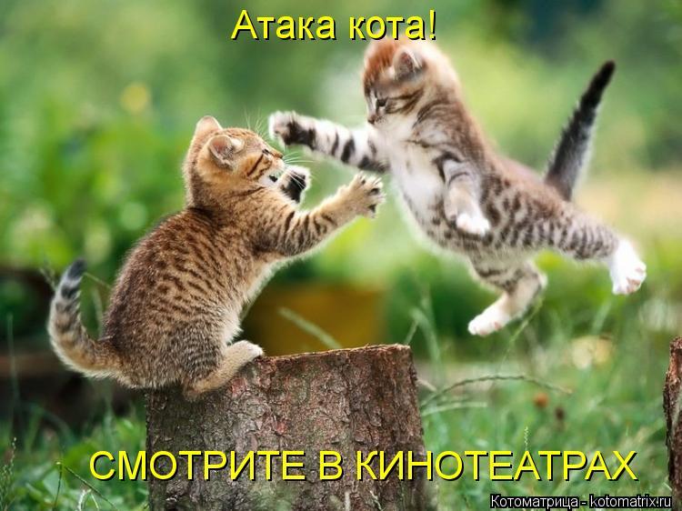 Котоматрица: Атака кота! CМОТРИТЕ В КИНОТЕАТРАХ