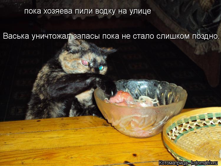 Котоматрица: пока хозяева пили водку на улице Васька уничтожал запасы пока не стало слишком поздно.