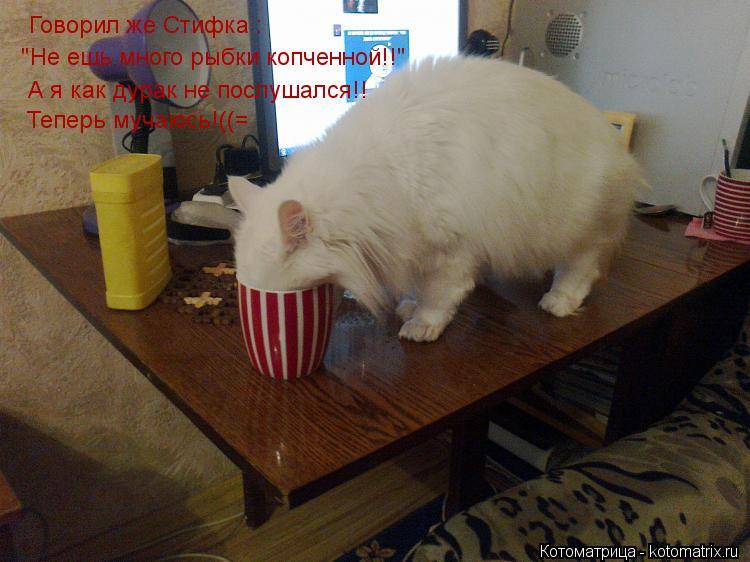 """Котоматрица: Говорил же Стифка : """"Не ешь много рыбки копченной!!"""" А я как дурак не послушался!! Теперь мучаюсь!((="""