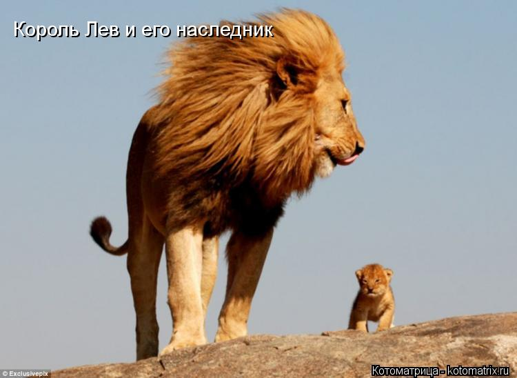Котоматрица: Король Лев и его наследник
