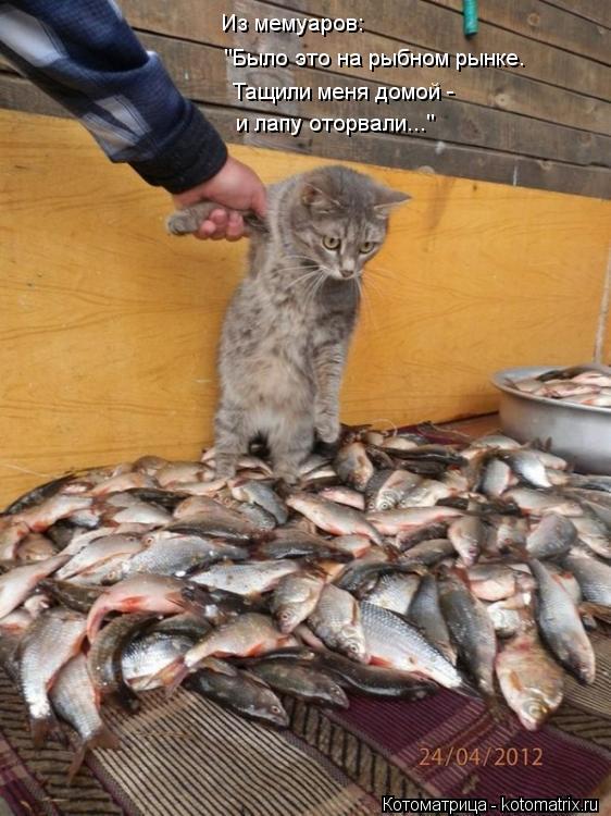 """Котоматрица: Из мемуаров: """"Было это на рыбном рынке. Тащили меня домой -  и лапу оторвали..."""""""
