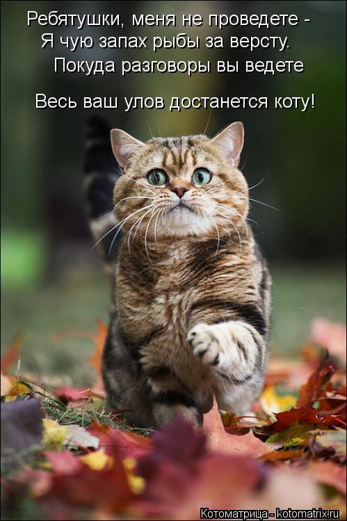 Котоматрица: Ребятушки, меня не проведете -  Я чую запах рыбы за версту. Покуда разговоры вы ведете  Весь ваш улов достанется коту!