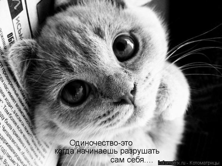Котоматрица: Одиночество-это  когда начинаешь разрушать сам себя....