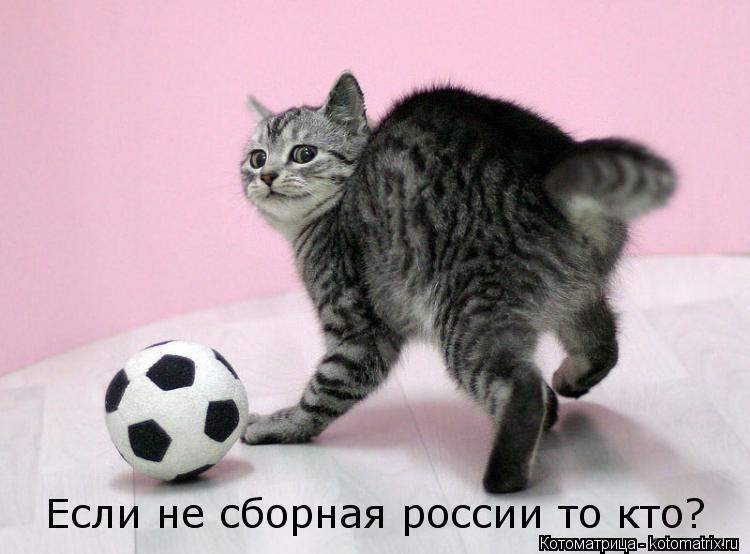 Котоматрица: Если не сборная россии то кто?