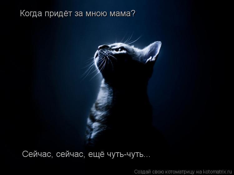 Котоматрица: Когда придёт за мною мама? Сейчас, сейчас, ещё чуть-чуть...