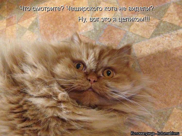 Котоматрица: Что смотрите? Чеширского кота не видели?       Ну, вот это я целиком!!!