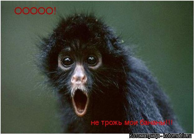 Котоматрица: ООООО! не трожь мои бананы!!!