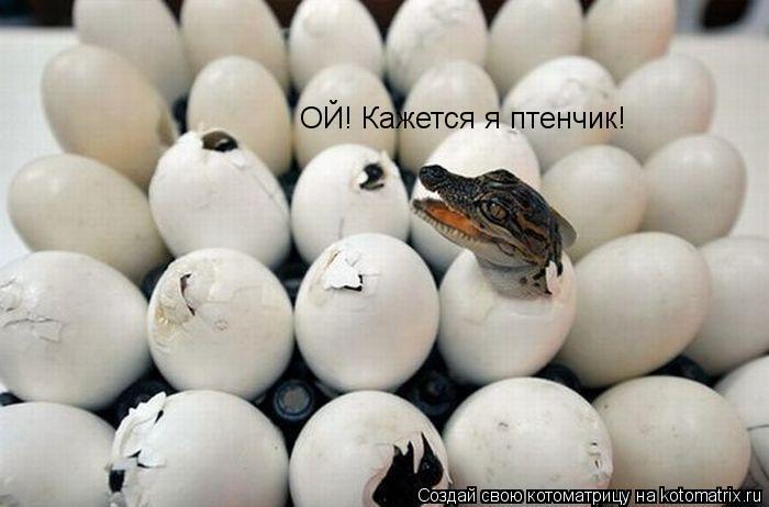 Котоматрица: ОЙ! Кажется я птенчик!