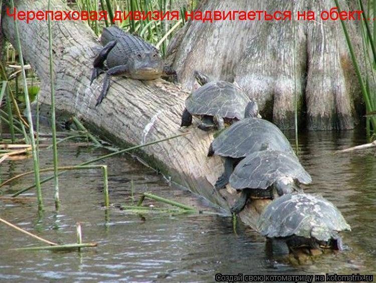 Котоматрица: Черепаховая дивизия надвигаеться на обект...
