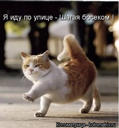 Котоматрица: Я иду по улице - Шагая босеком !