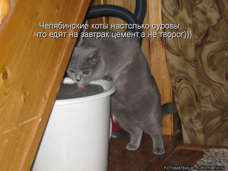 Котоматрица: Челябинские коты настолько суровы... что едят на завтрак цемент,а не творог)))