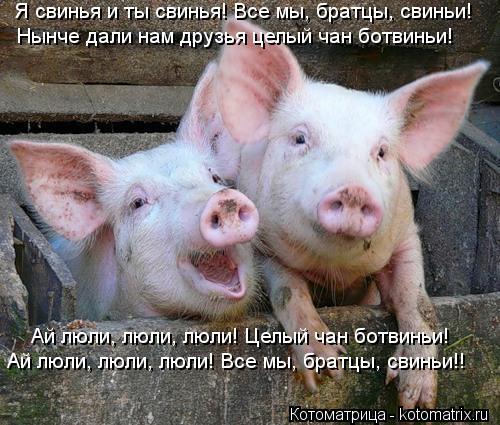 Котоматрица: Ай люли, люли, люли! Целый чан ботвиньи! Я свинья и ты свинья! Все мы, братцы, свиньи! Нынче дали нам друзья целый чан ботвиньи! Ай люли, люли, лю