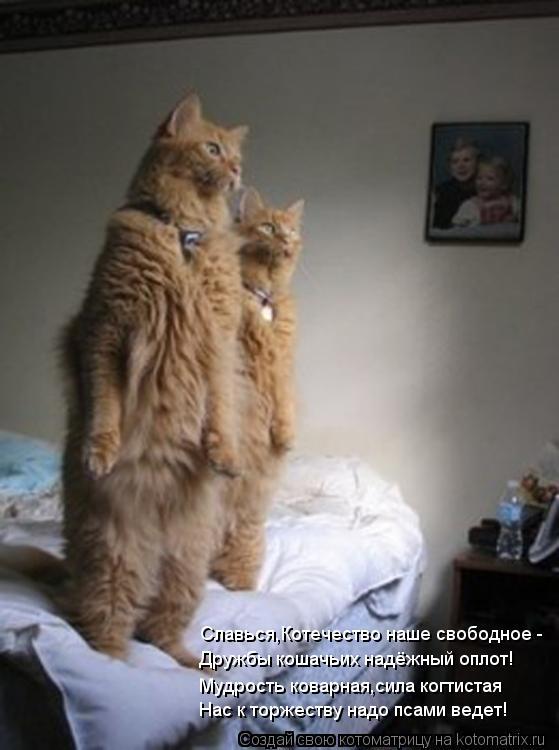 Котоматрица: Славься,Котечество наше свободное - Дружбы кошачьих надёжный оплот! Мудрость коварная,сила когтистая Нас к торжеству надо псами ведет!