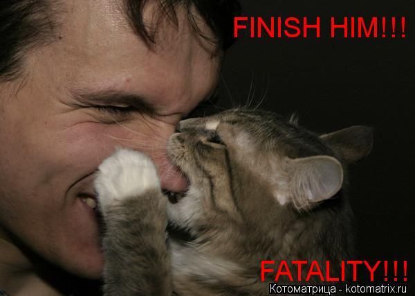 Котоматрица: FINISH HIM!!! FATALITY!!!