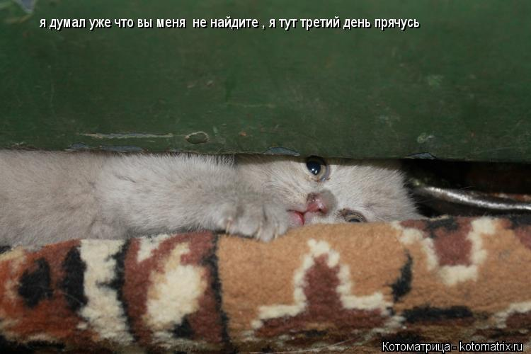 Котоматрица: я думал уже что вы меня  не найдите , я тут третий день прячусь