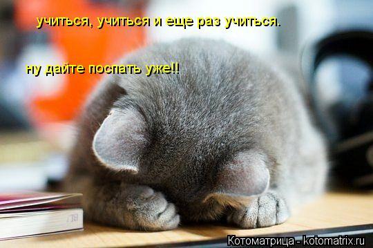 Котоматрица: учиться, учиться и еще раз учиться.   ну дайте поспать уже!!