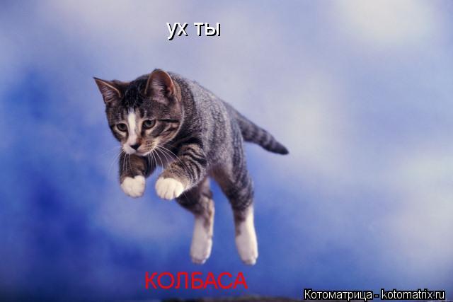 Котоматрица: ух ты КОЛБАСА