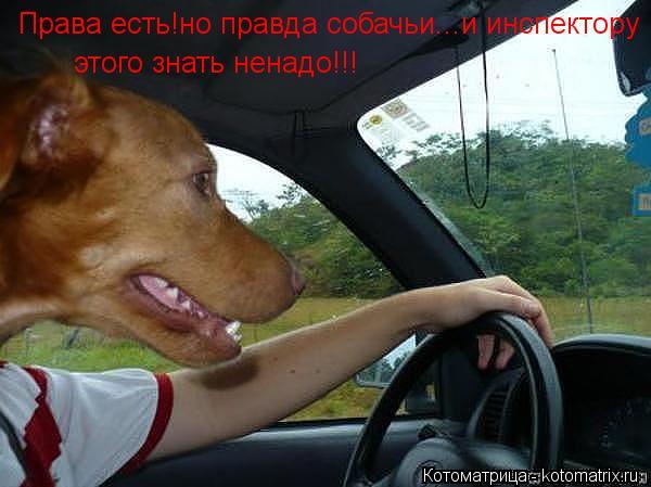Котоматрица: Права есть!но правда собачьи...и инспектору этого знать ненадо!!!