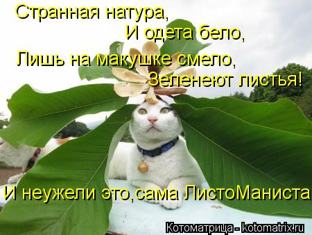 Котоматрица: Лишь на макушке смело, И одета бело, Странная натура, Зеленеют листья! И неужели это,сама ЛистоМаниста
