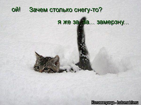 Котоматрица: ой! Зачем столько снегу-то? я же за..за... замерзну...