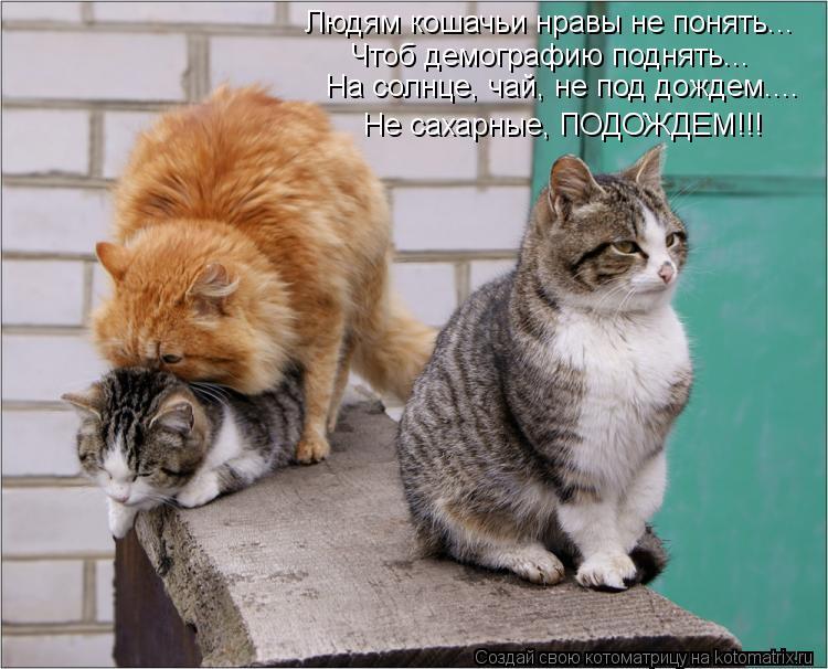 Котоматрица: Людям кошачьи нравы не понять... Чтоб демографию поднять... На солнце, чай, не под дождем.... Не сахарные, ПОДОЖДЕМ!!!
