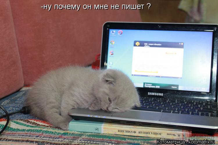 Котоматрица: -ну почему он мне не пишет ?