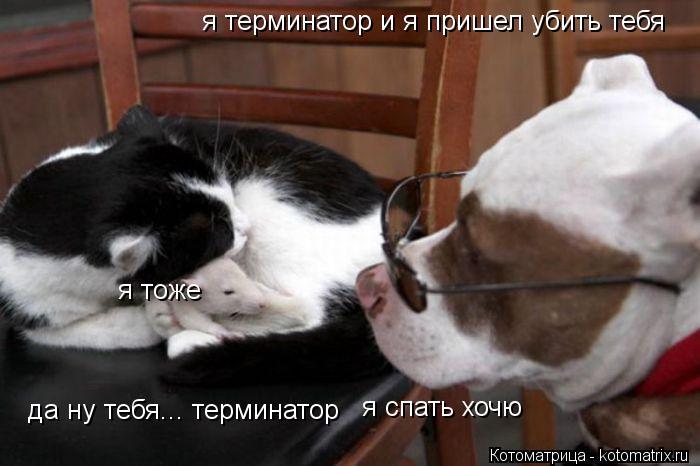 Котоматрица: я терминатор и я пришел убить тебя да ну тебя... терминатор я спать хочю я тоже