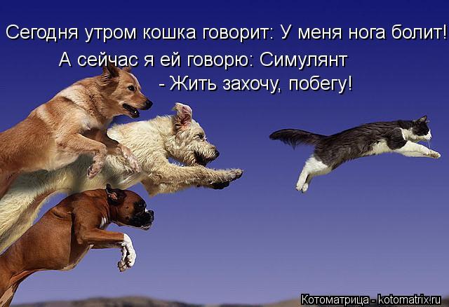 Котоматрица: Сегодня утром кошка говорит: У меня нога болит! А сейчас я ей говорю: Симулянт - Жить захочу, побегу!