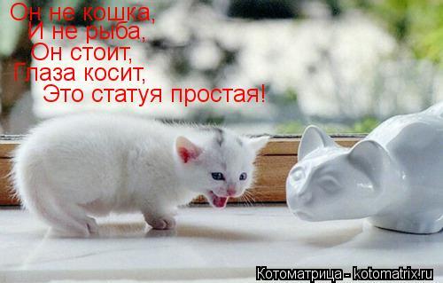 Котоматрица: Он не кошка,  И не рыба, Он стоит, Глаза косит, Это статуя простая!