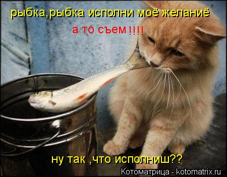 Котоматрица: рыбка,рыбка исполни моё желаниё  а то съем  !!!! ну так ,что исполниш??