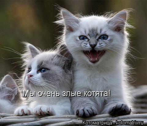Котоматрица: Не седите в интернете  мозги лопнут Мы очень злые котята!