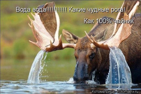 Котоматрица: Вода вода!!!!!!!!!!! Какие чудные рога!  Как 100% чайник  Вода вода!!!!!!!!!!! Какие чудные рога!   Как 100% чайник   Как 100% чайник