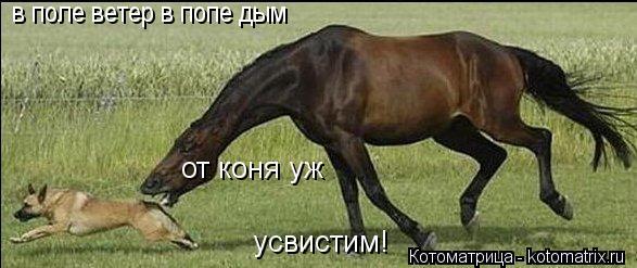 Котоматрица: от коня уж усвистим! в поле ветер в попе дым