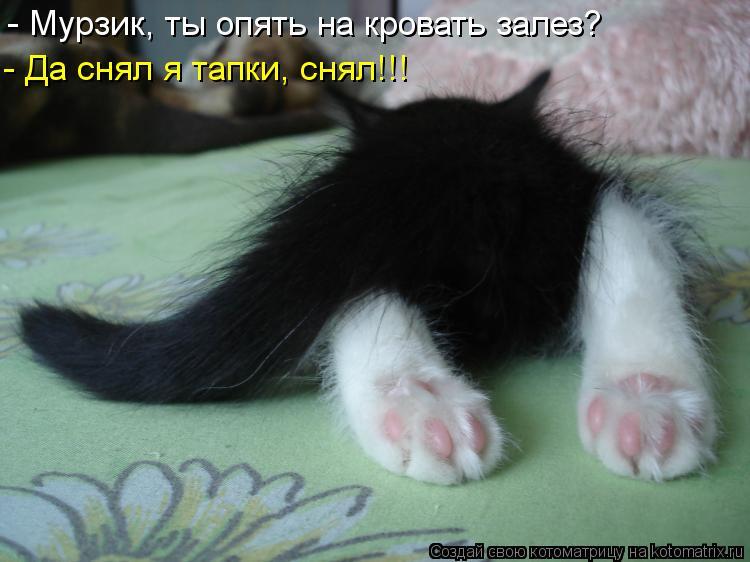 Котоматрица: - Мурзик, ты опять на кровать залез? - Да снял я тапки, снял!!!