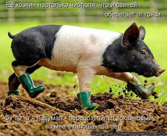 Котоматрица: -Её хозяин настолько чистюля, что и свиней оберегает от грязи. -Фу ты, а я подумал - передоз, пипец кокаиновый  ко мне в галошах шагает...