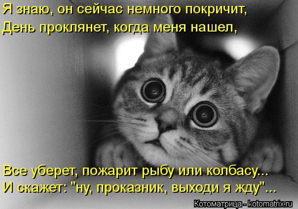 """Котоматрица: Я знаю, он сейчас немного покричит, День проклянет, когда меня нашел, Все уберет, пожарит рыбу или колбасу... И скажет: """"ну, проказник, выходи я"""