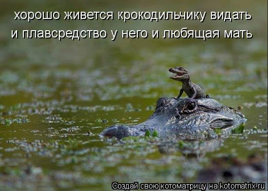 Котоматрица: хорошо живется крокодильчику видать и плавсредство у него и любящая мать